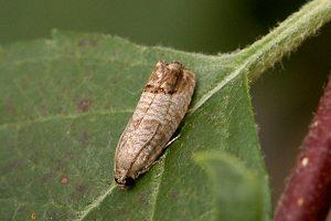 CM resting on leaf