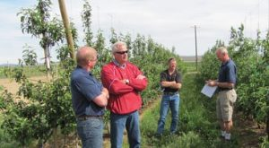 Members of the breeding program's Industry Advisory Council visiting a Phase 3 evaluation site