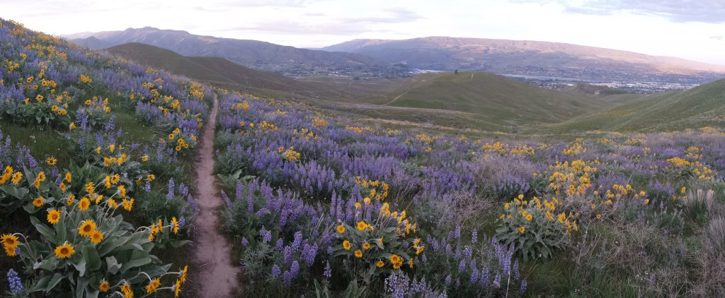 Mountain biking trail with blooming flowers