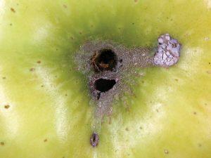 multiple stem end feeding holes.