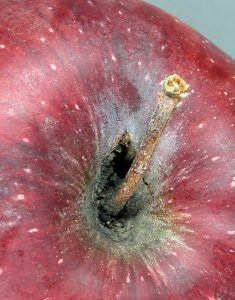 Hidden stem bowl hole.